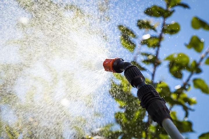 Tree Care and Spraying