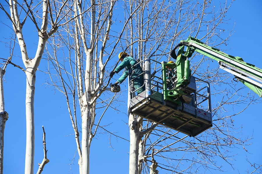 Tree Trimming Services by East Coast Tree Service