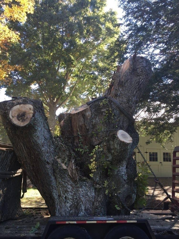 049b-Photos-East-Coast-Tree-Servie-Reading-MA