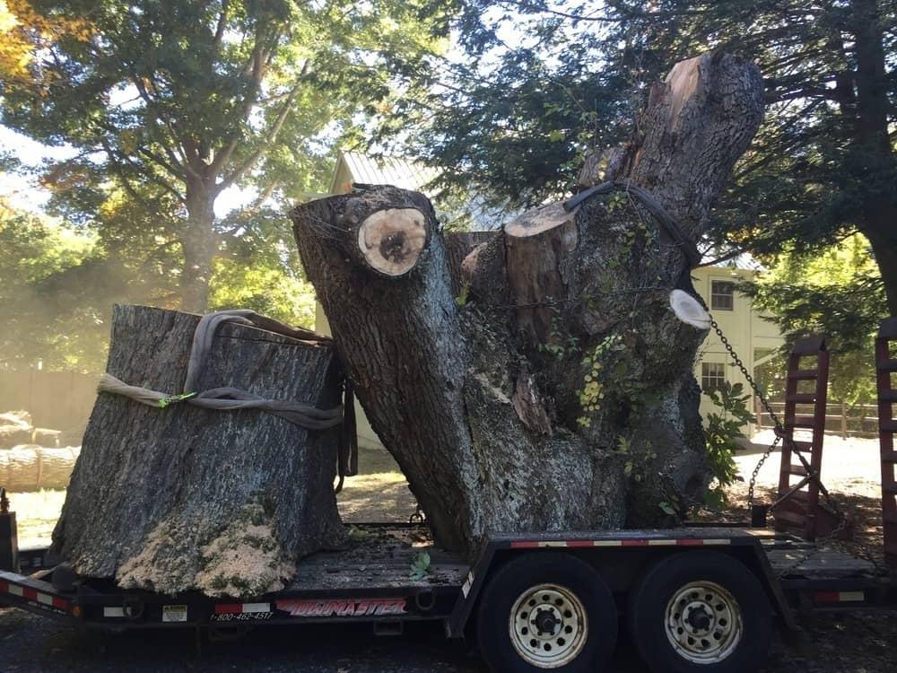 049c-Photos-East-Coast-Tree-Servie-Reading-MA