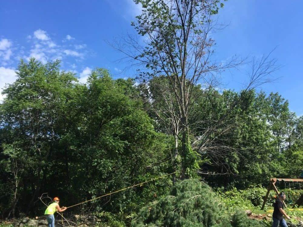 057-Photos-East-Coast-Tree-Servie-Reading-MA