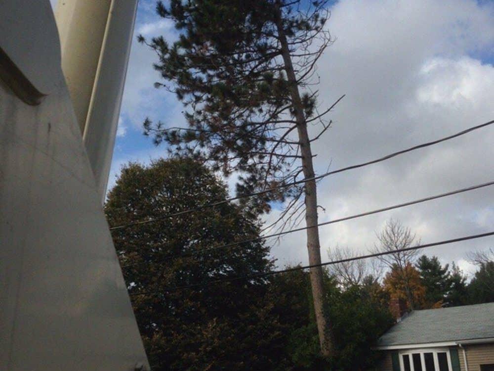 077-Photos-East-Coast-Tree-Servie-Reading-MA