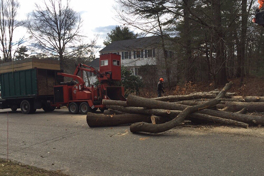 Tree Service by East Coast Tree Service